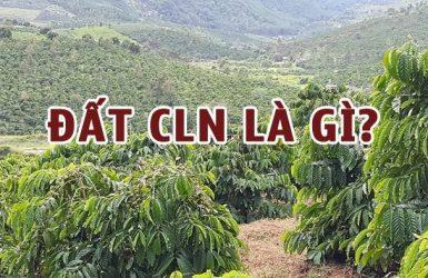 Đất CLN là gì? Khái niệm và đặc điểm của đất CLN